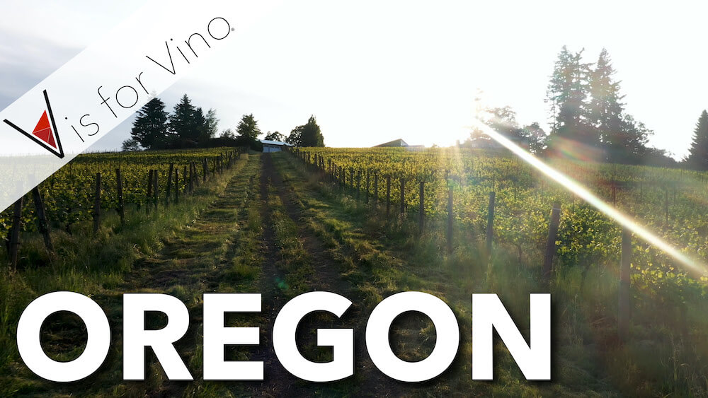 vineyard in willamette valley
